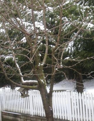 Skinny tree